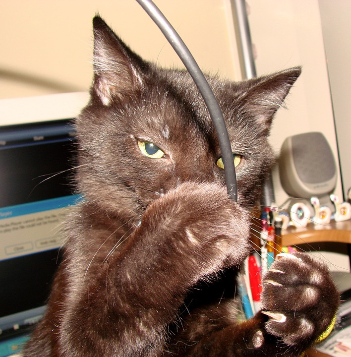 cat-70736_960_720.jpg